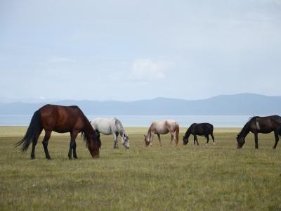 Along the Nomad Land